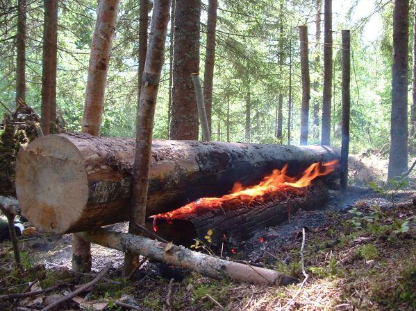 Sami long log